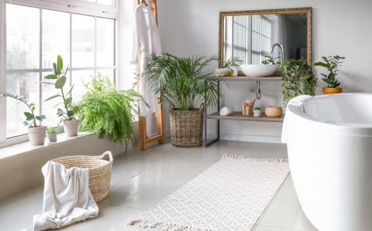Plants that Fare Well in a Bathroom